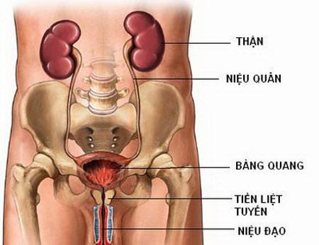 hình ảnh viêm đường tiết niệu ở nam giới